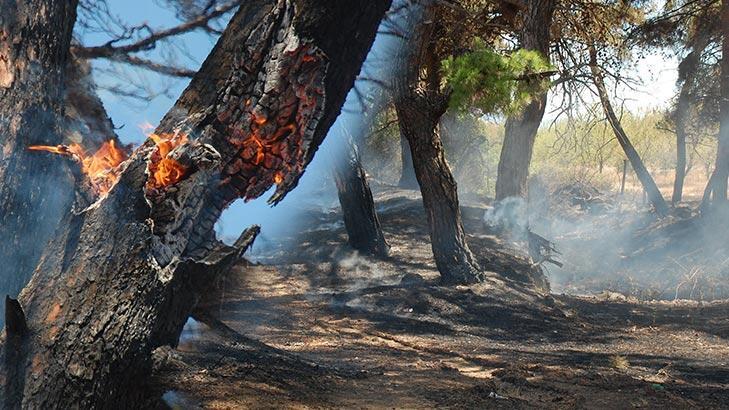 Saros'da başlayan yangın kontrol altına alındı